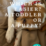 Which is Easier? A New Puppy or a Toddler?